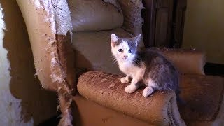 Download 40+ Cats/Kittens Rescued from Hoarding House Video