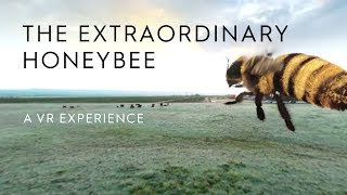 Download The Extraordinary Honey Bee | A 360 VR Experience | Häagen-Dazs® Video