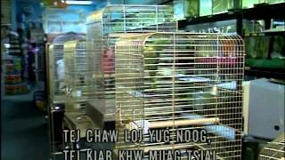 Download Biosecurity for Birds video with Hmong subtitles Video
