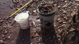Download Gold rush nugget bucket test panning clear creek Colorado Video