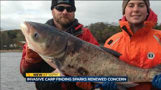 Download DNR finds invasive carp in Wisconsin River Video