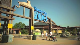 Download Visit Kansas City Zoo Video