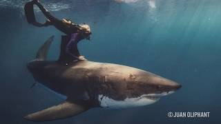 Download Ocean Ramsey Is the 'Little Blond Girl' Who Is Protecting Great White Sharks - The Inertia Video