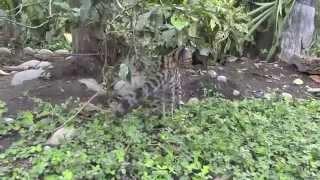 Download Peru - Animals Video