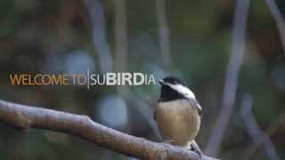 Download Make Your Yard More Bird-Friendly Video