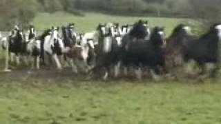 Download Gypsy Horses in Wales Video