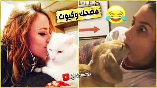 Download قطط وكلاب مضحكة جدا 😂 -اضحك حتى البكاء على القطط والكلاب (حيوانات مضحكة) #1 Video