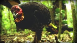 Download And The Mammals Laid Eggs (Full Documentary) Video