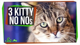 Download 3 Things Your Cat Should Not Be Doing Video