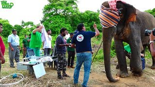 Download Expert Aid From Generous Germany To Save A Wild Elephant Video