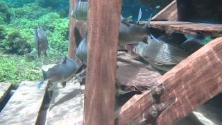 Download Snorkeling at Rio da Prata # 255 Brazil Video