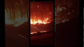 Download Gatlinburg wildfire footage on caught on tape forest fire tn Tennessee Video