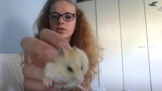 Download My hamster Cream is changing colors Video