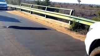 Download Snake slithers into pothole at Kruger National Park Video