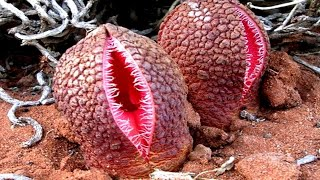Download FRIGHTENING Plants You Should Absolutely Be Afraid of! Video