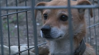 Download Dog Waits In The Exact Same Place Every Night | Animal in Crisis EP2 Video