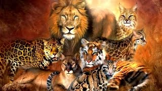 Download All Feline Species - Species List Video