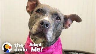 Download Let's Help This Pittie Find A Home After 7 Years In The Shelter | The Dodo Adopt Me! Video