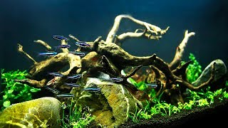 Download HOW TO Aquascape on a small budget NON-CO2 injection Video