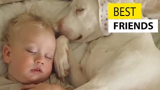 Download Cute Babies and Dogs || JukinVideo Video