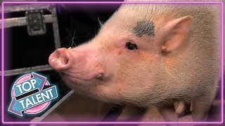 Download ANIMALS GOT TALENT! Intelligent Animals From Around The World! | Top Talent Video