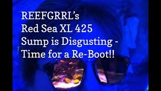 Download Reefgrrl's Red Sea XL 425 - Sump is Disgusting! Time for a Reboot! Video
