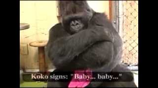 Download Koko's Wish for a Family Video