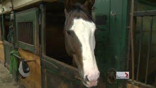 Download Several horses escape Sunnybrook Stables Video
