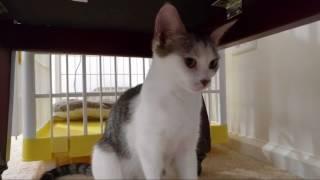 Download Kitten Close Up 2017-07-25 Video