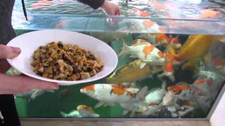 Download Koi Food Treats What Treats I Feed My Koi Video