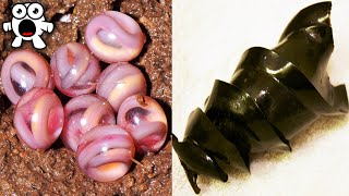 Download Weird Animal Eggs That Are Extremely Strange Video