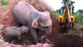 Download Baby and elephant mother saved from a pit by real life heroes Video