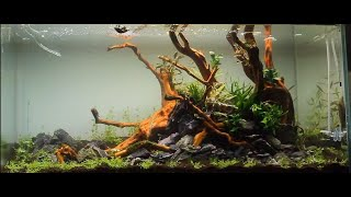 Download Aquascape ADA 90P - a dream come true - Video