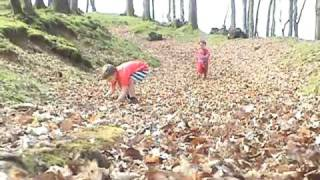 Download Harry and Charlie - Running in the Leaves Video