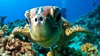 Download Great Barrier Reef Dive & Snorkel - Port Douglas Australia Video