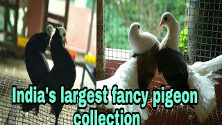 Download LARGEST FANCY PIGEON FARM IN INDIA /ALL KIND OF FANCY PIGEON AVAILABLE FOR SALE Video