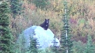 Download BOOM, HEAD SHOT black bear - Stuck N the Rut 34 Video