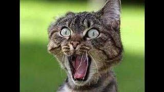 Download chat qui miaule très fort comme un bébé A VOIR !!! 2/2 Video