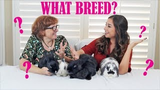 Download WHAT BREED IS YOUR RABBIT? Video