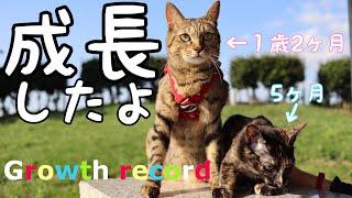 Download [成長まとめ]よもはちつむぎの一ヶ月の成長の全て part 12. 2018.8月8日~10月15日[子猫][保護猫] Video