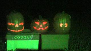 Download Singing Pumpkins for Halloween Using AtmosfearFX Pumpkin Jamboree Video