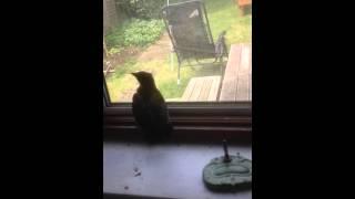 Download Birdman Video
