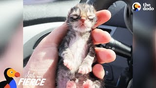 Download Newborn Kitten Who Was Frozen Solid Grows Up To Be Strong And Feisty | The Dodo Little But Fierce Video