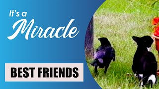 Download Best Friends - It's a Miracle - 6033 Video