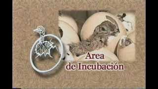 Download Crianza de Avestruces - Agroinca ppx Video
