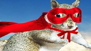 Download THE ULTIMATE SQUIRREL Video