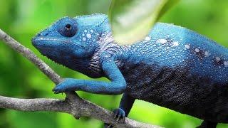 Download Chameleon Changing Color Video