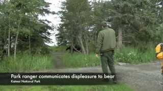 Download Bear Safety Tips While Hiking in Alaska 720p Video