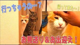 Download 飼い主をお見送りとお出迎えしてくれる猫たちが超絶に可愛かった…!! Video