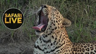 Download safariLIVE - Sunrise Safari - May 23, 2018 Video